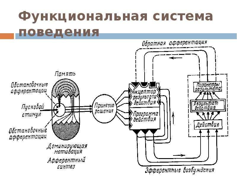 Функциональная система поведения