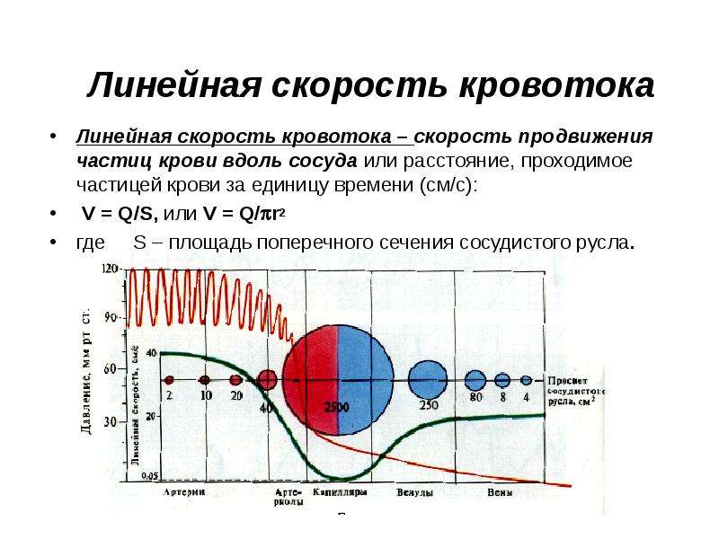 Линейная скорость кровотока Линейная скорость кровотока – скорость продвижения частиц крови вдоль со