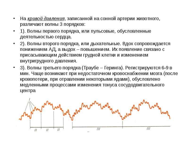 На кривой давления, записанной на сонной артерии животного, различают волны 3 порядков: На кривой да