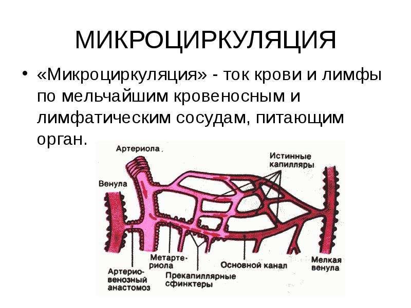 МИКРОЦИРКУЛЯЦИЯ «Микроциркуляция» - ток крови и лимфы по мельчайшим кровеносным и лимфатическим сосу