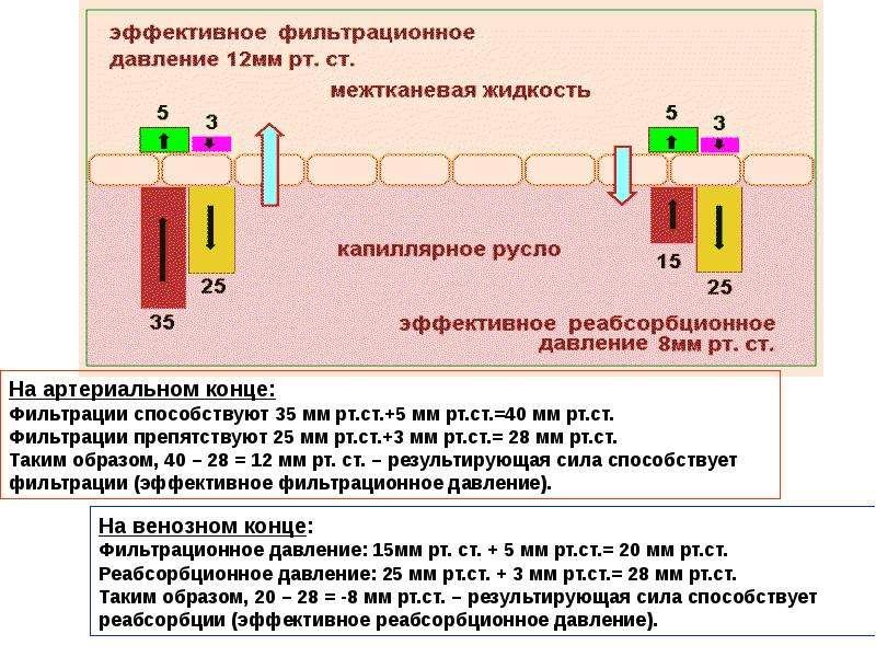 Физиология сосудов. Гемодинамика и артериальное давление, слайд 28