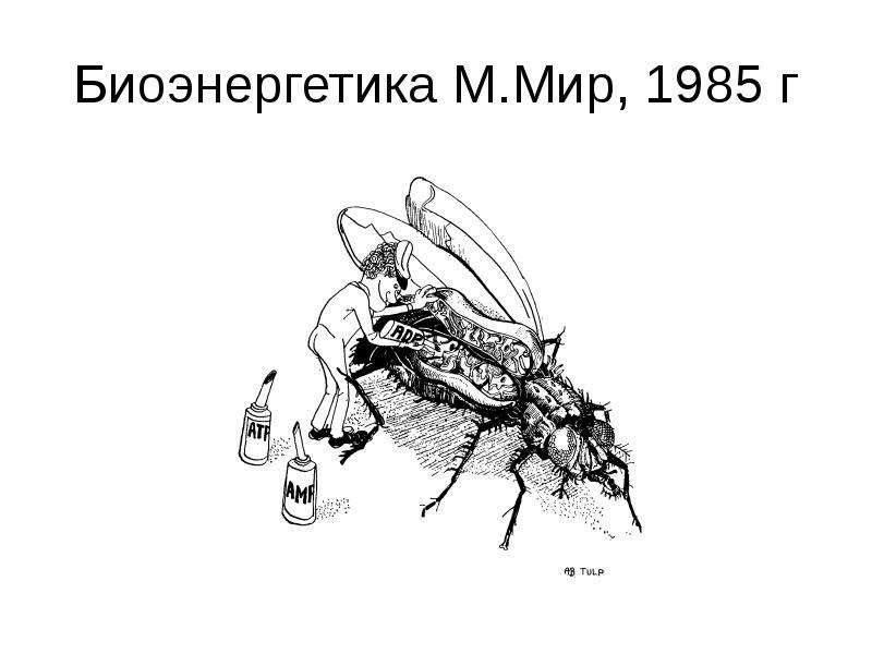 Биоэнергетика М. Мир, 1985 г