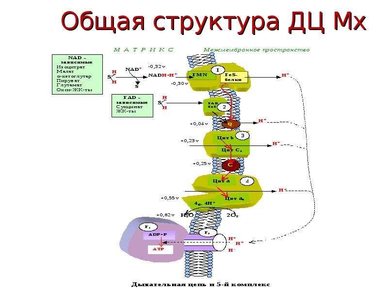 Общая структура ДЦ Мх