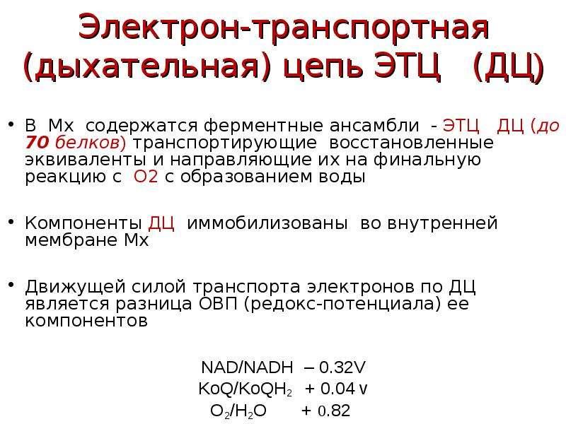 Электрон-транспортная (дыхательная) цепь ЭТЦ (ДЦ) В Мх содержатся ферментные ансамбли - ЭТЦ ДЦ (до 7