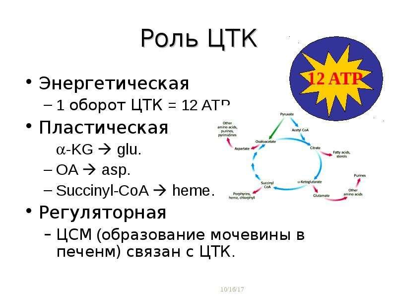 Роль ЦТК Энергетическая 1 оборот ЦТК = 12 ATP. Пластическая -KG  glu. OA  asp. Succinyl-CoA  hem