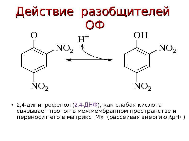 Действие разобщителей ОФ 2,4-динитрофенол (2,4-ДНФ), как слабая кислота связывает протон в межмембра