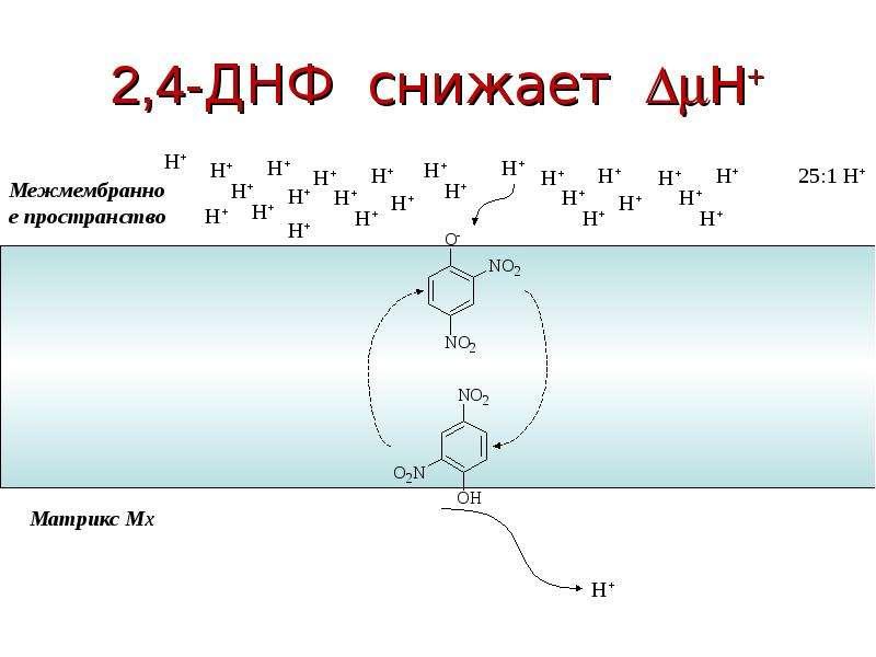 2,4-ДНФ снижает H+