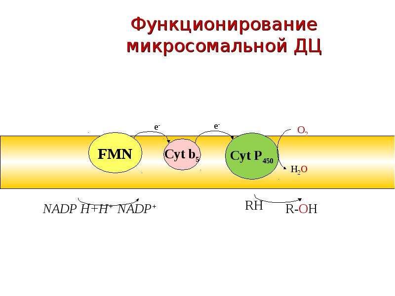 Функционирование микросомальной ДЦ