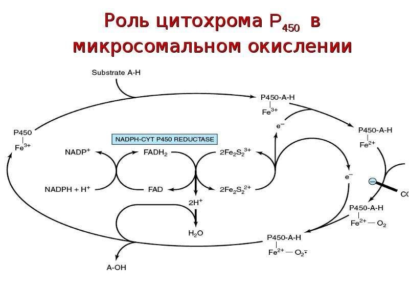 Роль цитохрома P450 в микросомальном окислении