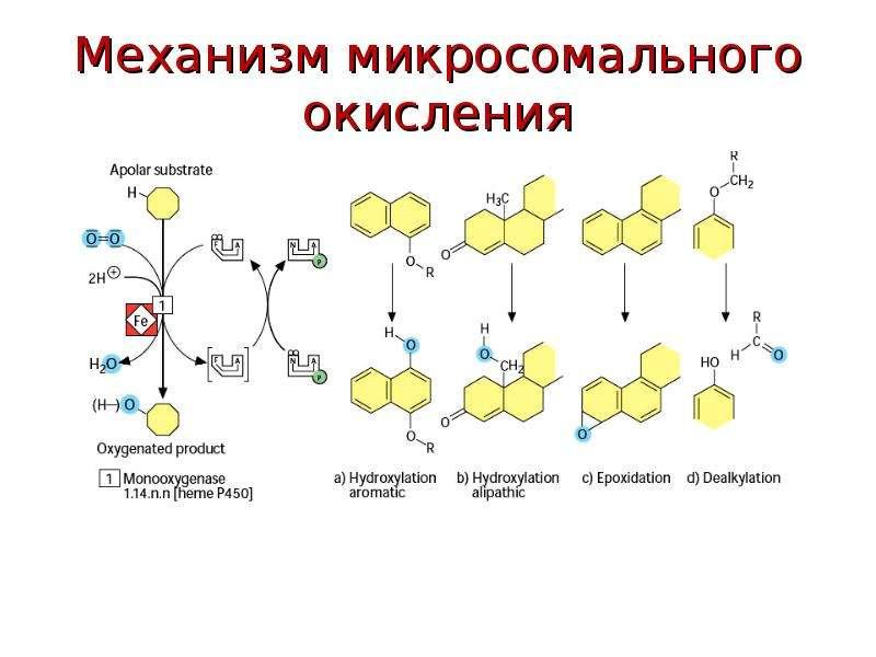 Механизм микросомального окисления