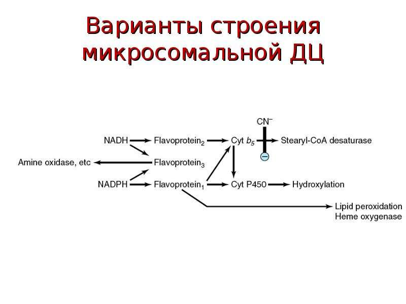 Варианты строения микросомальной ДЦ