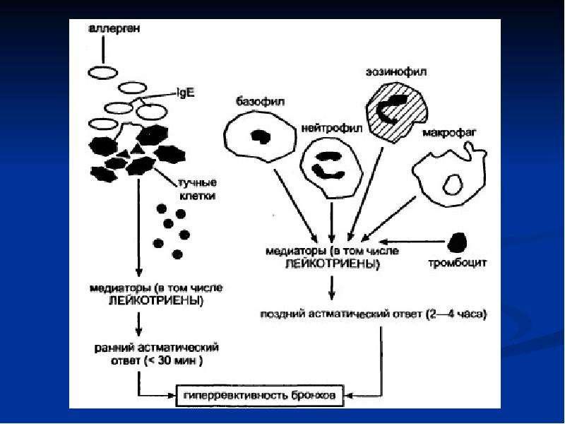 Лекарственные средства, применяемые при терапии бронхообструктивного синдрома (БОС), слайд 21