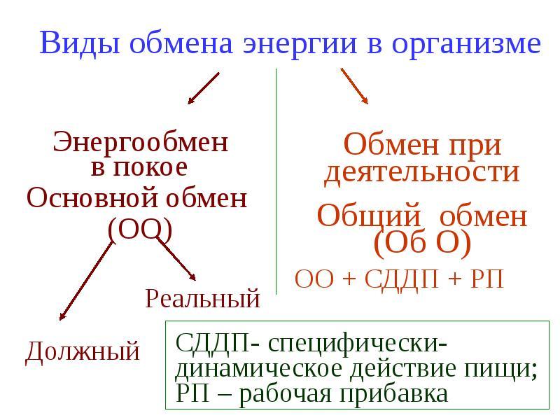 Обмен и баланс энергии в организме и их регуляция, слайд 23