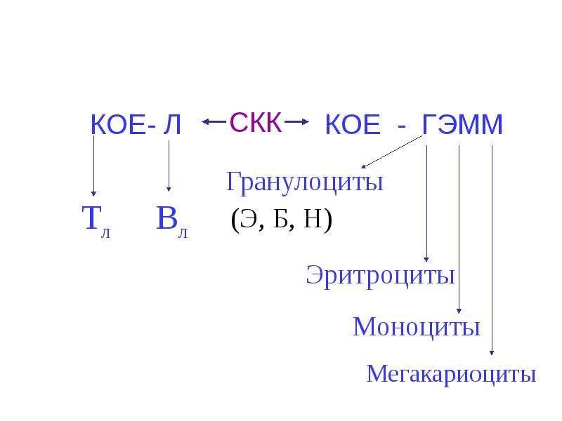 Копия Транспортная функция крови, слайд 26