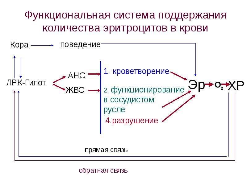 Копия Транспортная функция крови, слайд 43