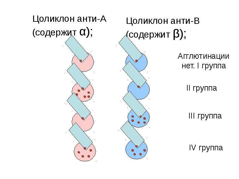 Копия Транспортная функция крови, слайд 53
