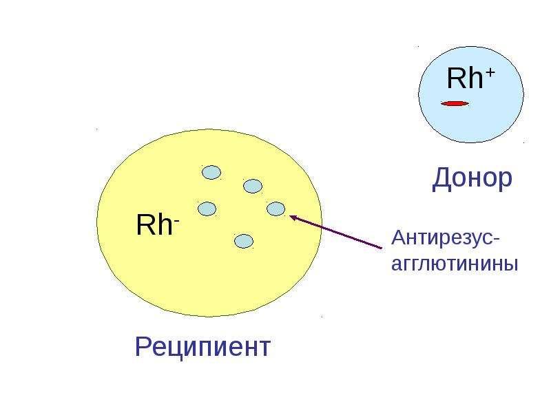 Копия Транспортная функция крови, слайд 58