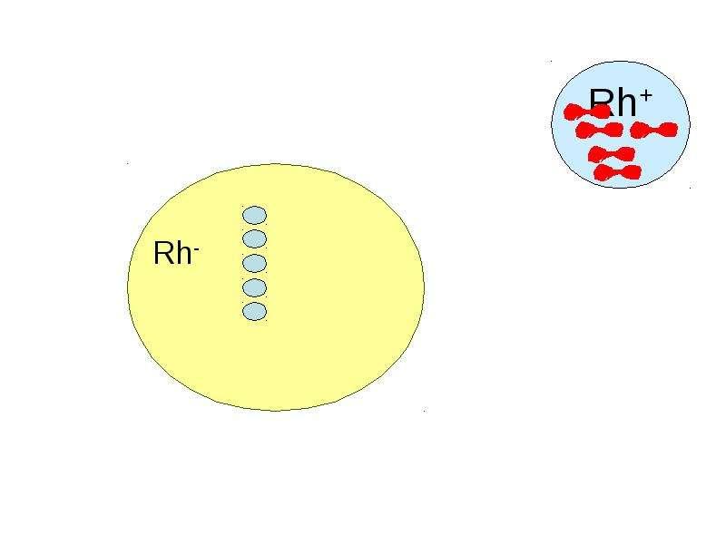 Копия Транспортная функция крови, слайд 59