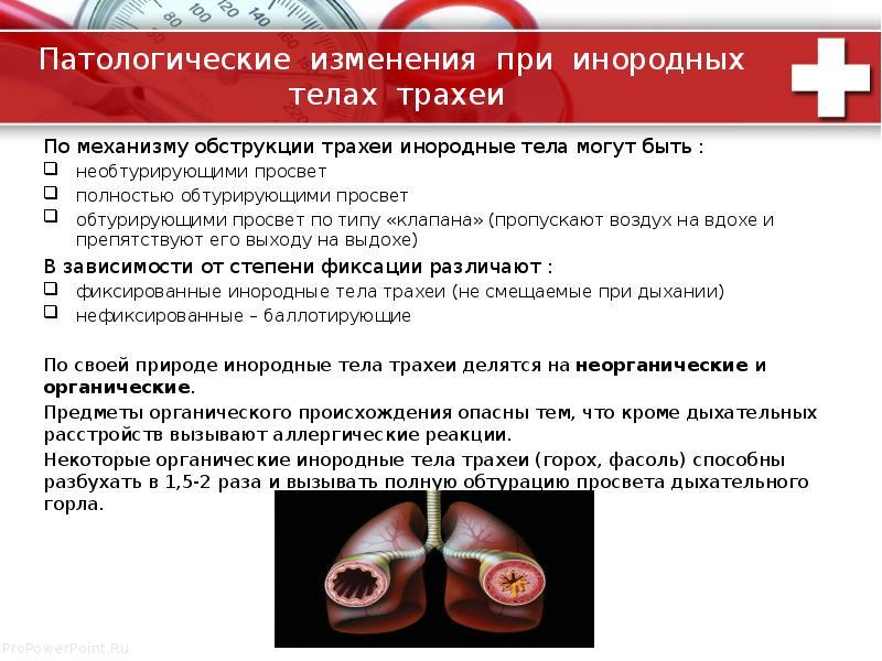 Патологические изменения при инородных телах трахеи По механизму обструкции трахеи инородные тела мо