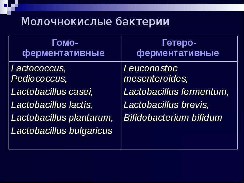 Молочнокислые бактерии