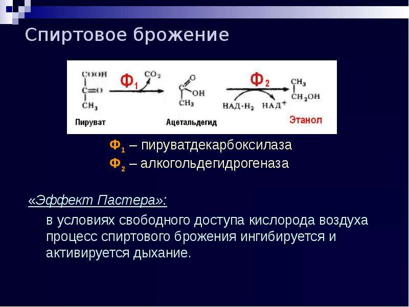 Спиртовое брожение «Эффект Пастера»: в условиях свободного доступа кислорода воздуха процесс спиртов