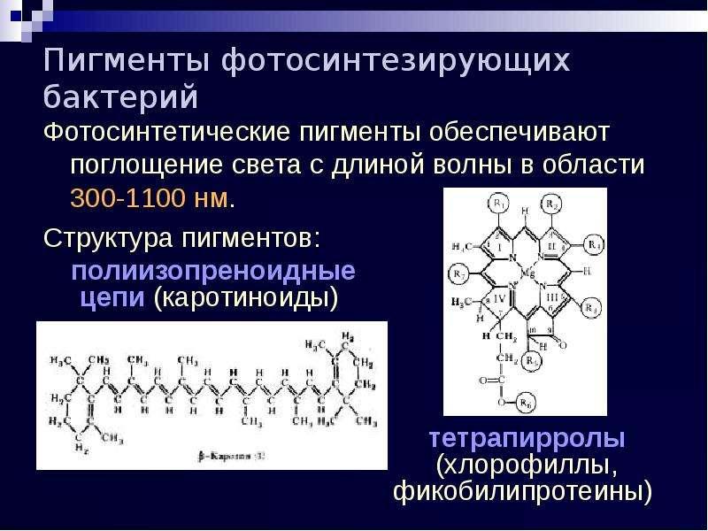 Пигменты фотосинтезирующих бактерий Фотосинтетические пигменты обеспечивают поглощение света с длино