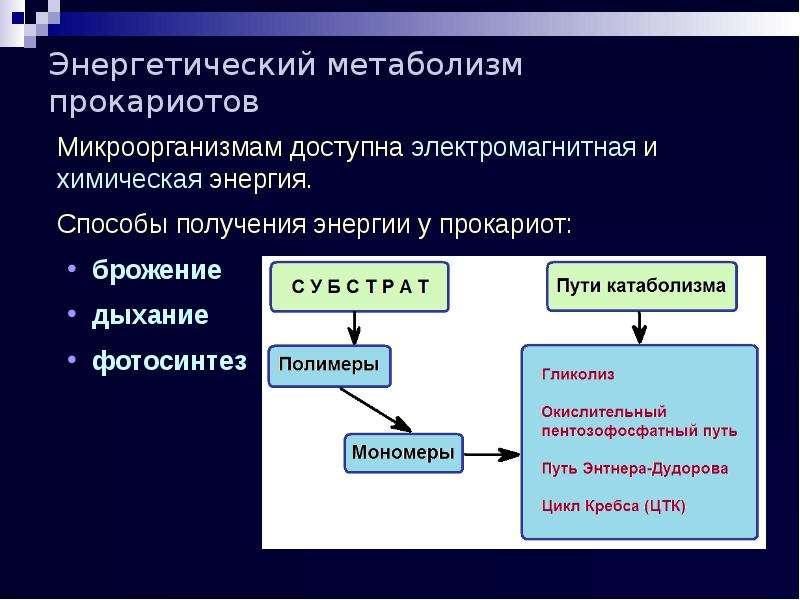Энергетический метаболизм прокариотов Микроорганизмам доступна электромагнитная и химическая энергия