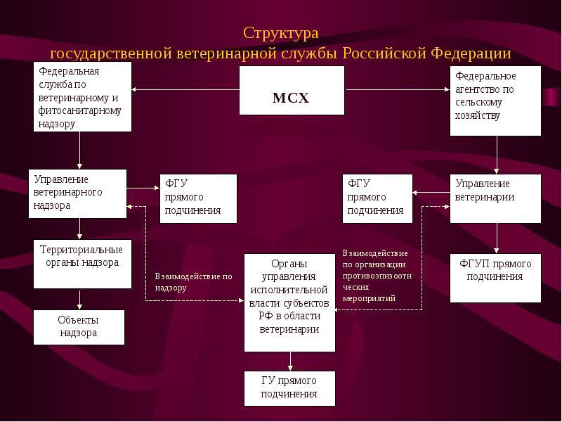 Структура государственной ветеринарной службы Российской Федерации