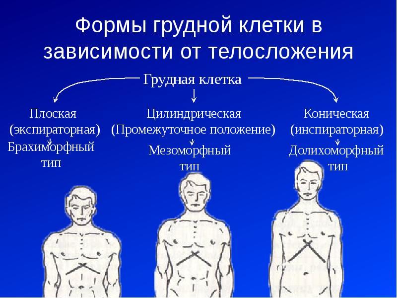 Формы грудной клетки в зависимости от телосложения