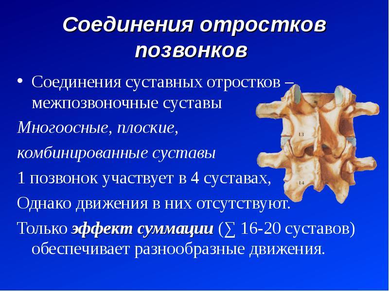 Соединения отростков позвонков Соединения суставных отростков – межпозвоночные суставы Многоосные, п