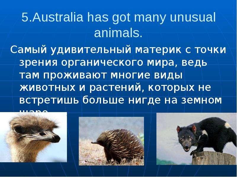 5. Australia has got many unusual animals. Самый удивительный материк с точки зрения органического м