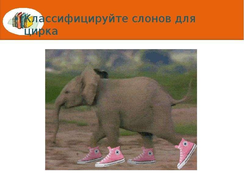 Классифицируйте слонов для цирка Классифицируйте слонов для цирка