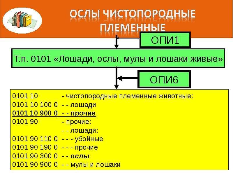 Правила интерпретации. Алгоритм последовательного включения конкретного товара в определенную позицию классификации, слайд 98