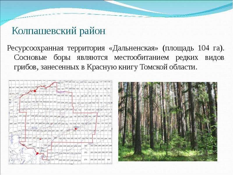 Колпашевский район Ресурсоохранная территория «Дальненская» (площадь 104 га). Сосновые боры являются
