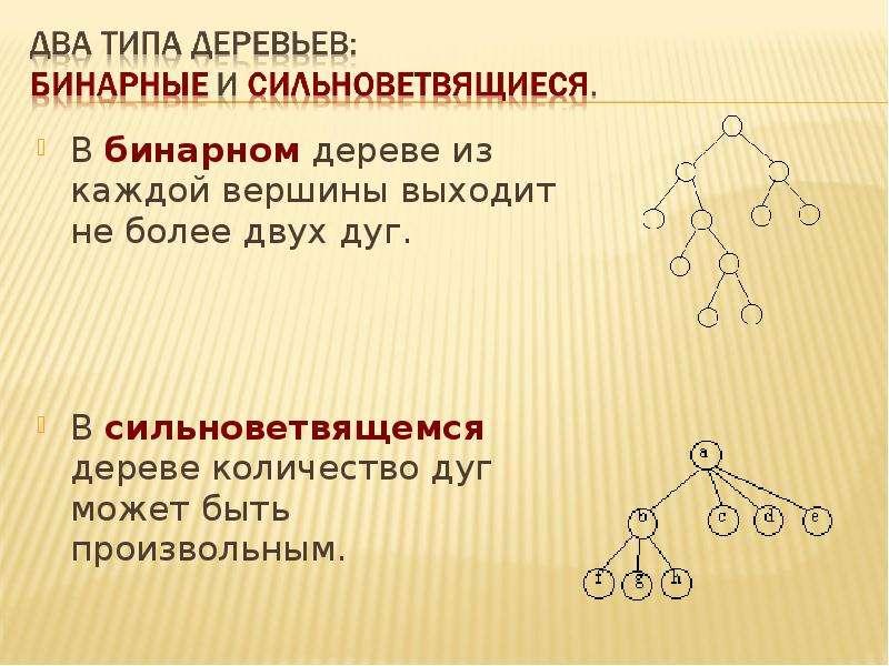 В бинарном дереве из каждой вершины выходит не более двух дуг. В бинарном дереве из каждой вершины в