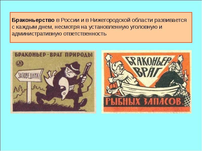Браконьерство в России и в Нижегородской области развивается с каждым днем, несмотря на установленну