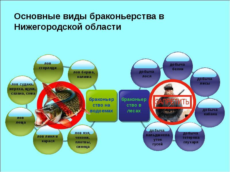 Основные виды браконьерства в Нижегородской области