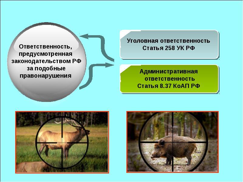 Браконьерство в Нижегородской области, слайд 5