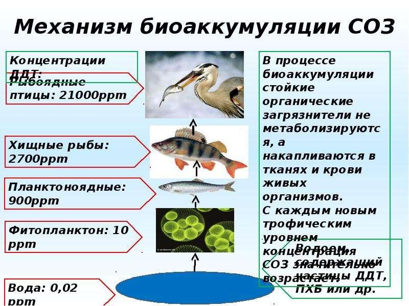 Механизм биоаккумуляции СОЗ