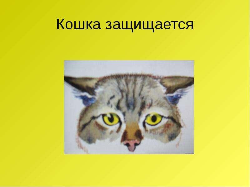 Кошка защищается