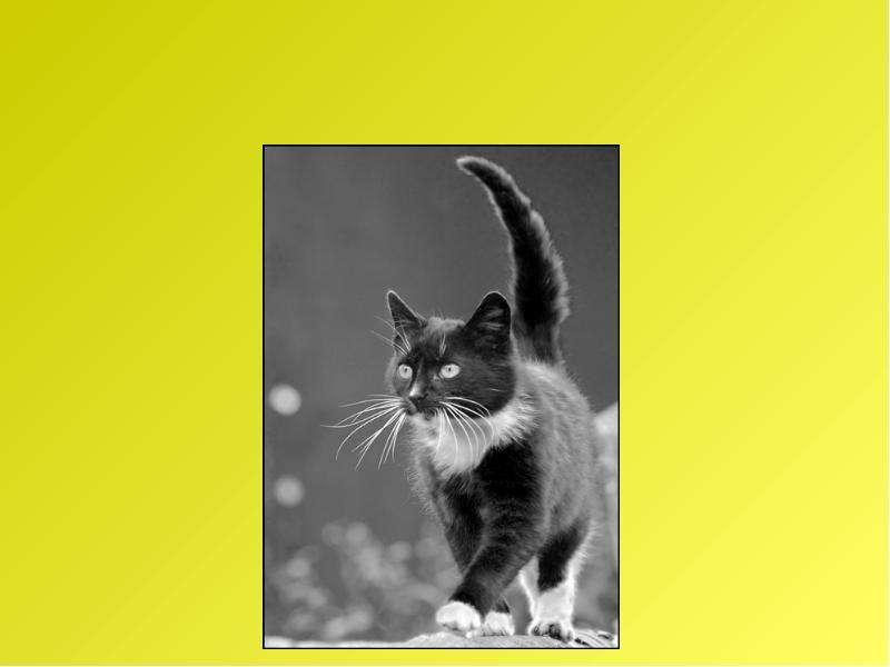 Рассказ по воображению. Рассказ от лица животного. Интегрированный урок русского языка и биологии, слайд 21