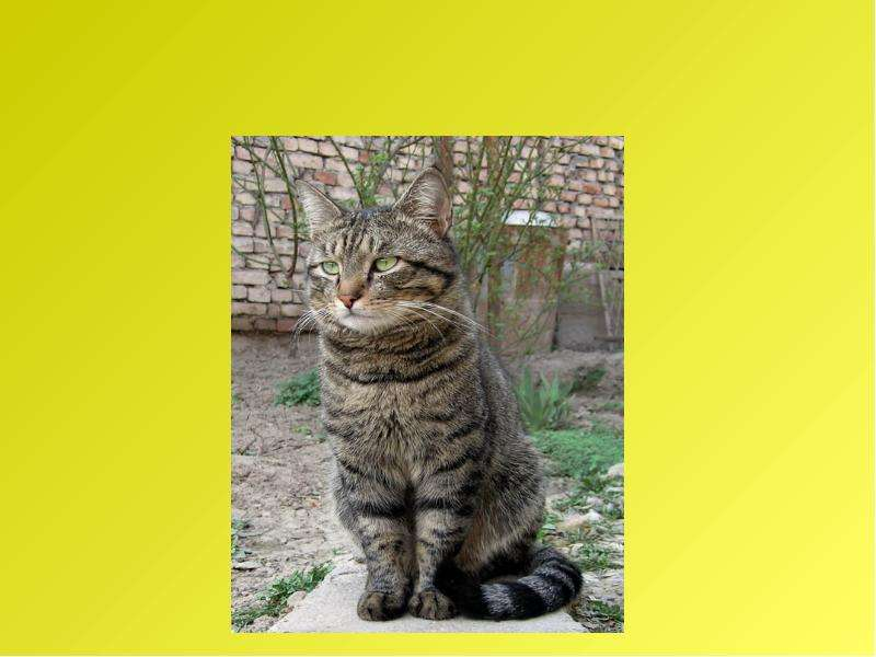 Рассказ по воображению. Рассказ от лица животного. Интегрированный урок русского языка и биологии, слайд 22