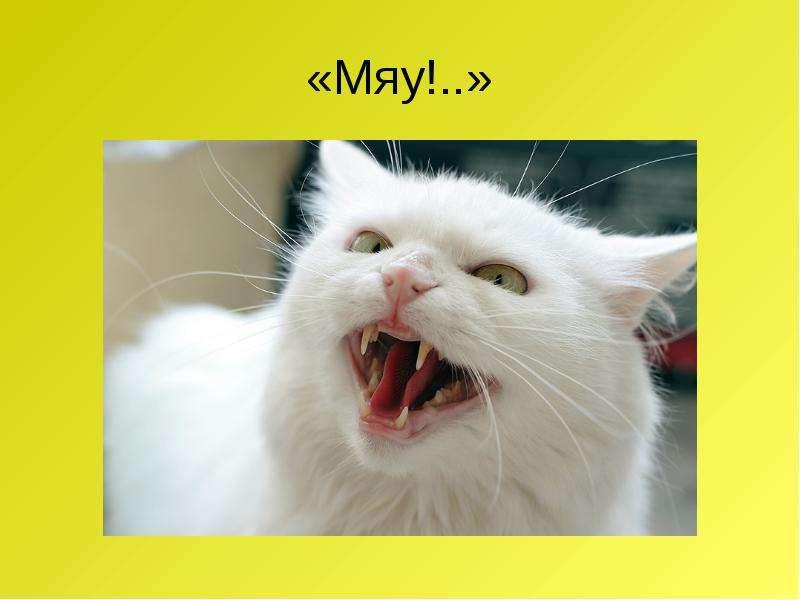 «Мяу!. . »