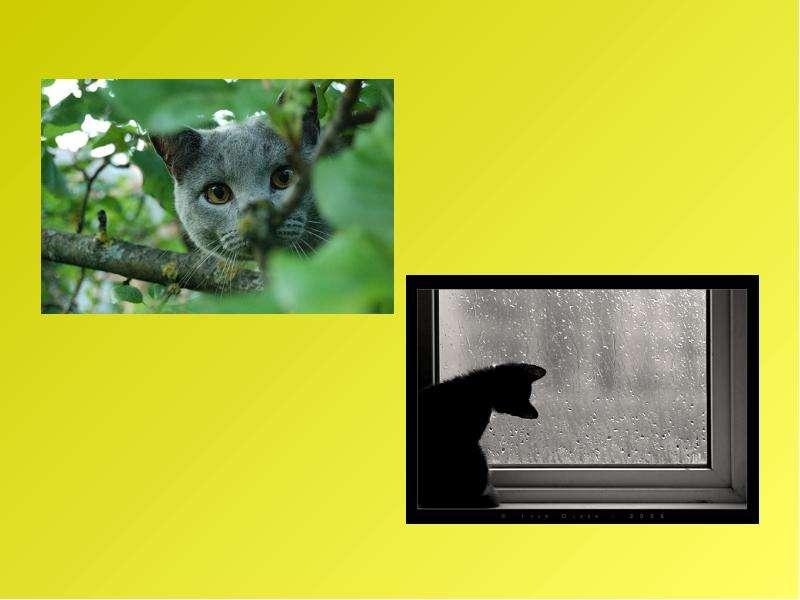 Рассказ по воображению. Рассказ от лица животного. Интегрированный урок русского языка и биологии, слайд 26