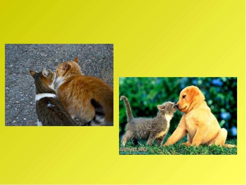 Рассказ по воображению. Рассказ от лица животного. Интегрированный урок русского языка и биологии, слайд 28