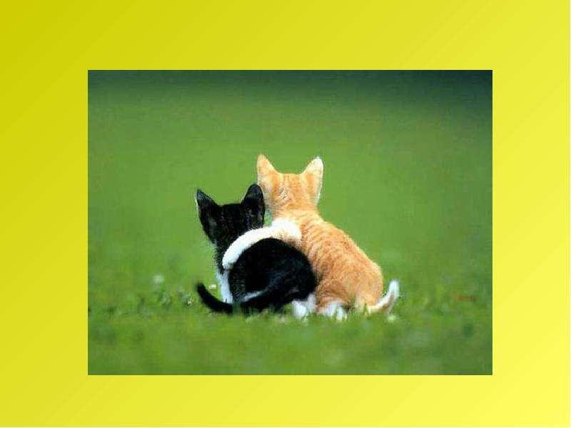 Рассказ по воображению. Рассказ от лица животного. Интегрированный урок русского языка и биологии, слайд 32