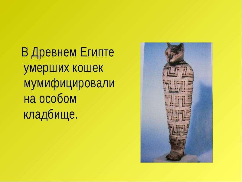 В Древнем Египте умерших кошек мумифицировали на особом кладбище. В Древнем Египте умерших кошек мум