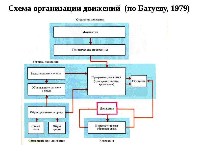Схема организации движений (по Батуеву, 1979)