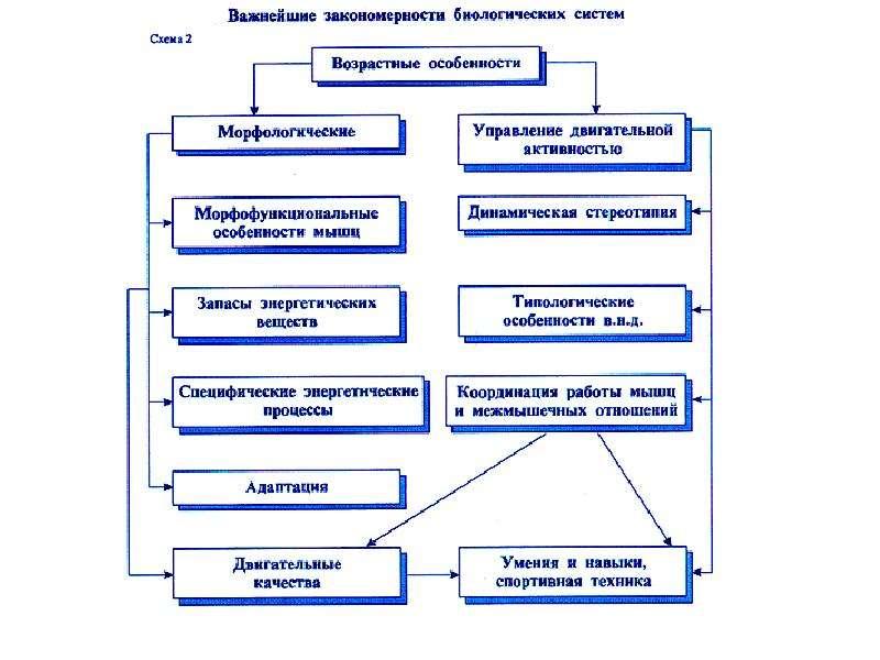 Физиология спортивной деятельности. Физиологические основы обучения и совершенствования спортивной техники, слайд 26