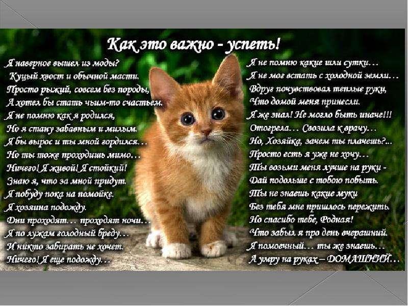 стихи от лица животных воспитывают